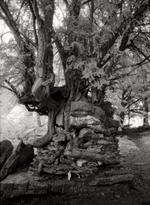 Beth Moon: Devil's Pulpit