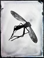 Bill Westheimer: Buggy 14