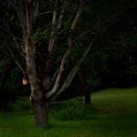 Cig Harvey: The Bird House, 2012