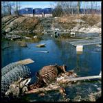 Colleen Plumb: Sauganash Deer, 2003
