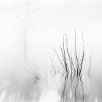 David H. Gibson: Reeds with Cypress, Village Creek, Texas, 1987