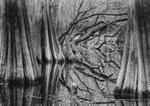 David H. Gibson: Tree Rhythms and Reflections, Baxter Slough, Silsbee, Texas, 1993