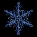 Douglas Levere: Snowflake 2015.02.02.007