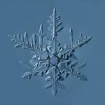 Douglas Levere: Snowflake 2015.02.22.002.1