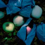 Jane Alden Stevens: Culled Apples, Fall, Aomori Prefecture