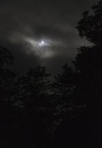 Jeanine Michna-Bales: Nightlight