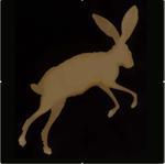Kate Breakey: Antelope Jackrabbit