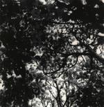 Ken Rosenthal: Autumn