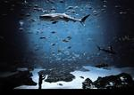 Kyle Ford: The Whale Shark Tank, 2007
