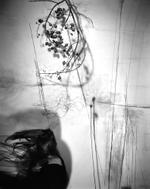 Lauren Semivan: Branches, 2011