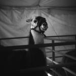 Meg Birnbaum: Petting Zoo, 2008