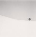 Michael Kenna: Single Tree, Mita, Hokkaido, Japan, 2007