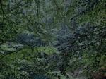 Michael Lange: WALD | Landscapes of Memory #5476