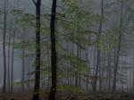 Michael Lange: WALD   Landscapes of Memory #2504
