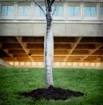 Michael Matsil: Tree and Column, 1997