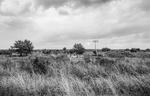 Nathan Benn: Quality Landscape, 1981