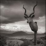 Nick Brandt: Kudu Trophy, Chyulu Hills, Kenya, 2012