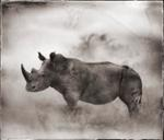 Nick Brandt: Rhino in Dust, Lewa Downs, 2003