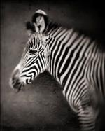 Nick Brandt: Zebra Portrait, Lewa Downs, 2002