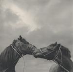 Pentti Sammallahti: Untitled, 1979