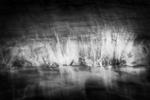 Svjetlana Tepavcevic: The Sea Inside no. 9824