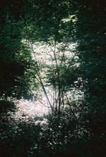 Terri Weifenbach: Woods 25, 2009