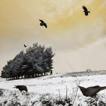 Tom Chambers: As The Crow Flies